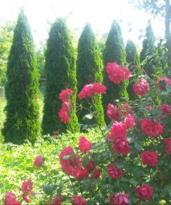 Zo záhrady